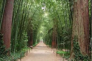 1.bambouseraie